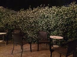 star jasmine sarah u0027s urban rooms and blooms