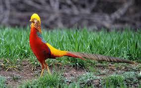 different birds photos download