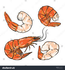 cocktail drawing shrimp cocktail drawing on white background stock vector 481355917