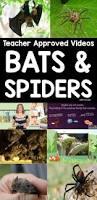 bat u0026 spider videos for kids simply kinder