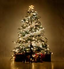 simple design trees with lights tree outdoors in