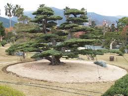 Pflanzen Fur Japanischen Garten Takasago An Bonsai Garden Japan Japanese Garden Pinterest