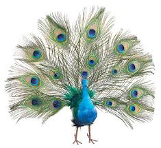 exquisite fan peacock feathers wedding tree topper