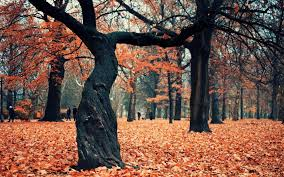 trees autumn forest high quality picture wallpaper nature and