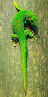 a green snake wallpapers 53 best scaley babies images on pinterest nature amphibians and