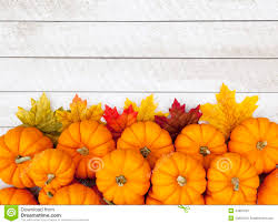 fall pumpkins background pictures autumn pumpkin thanksgiving background stock photo image 44894394