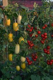 20 vertical vegetable garden ideas home design garden