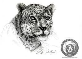 art and conservation journal panthera onca jaguar pencil
