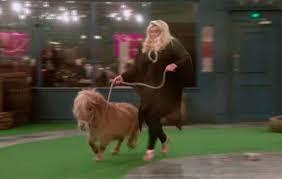 shetland pony becomes internet hit after appearing on celebrity big