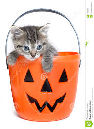 halloween kittens kitten in a bucket stock photo image 54780229
