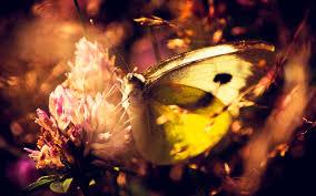 native plants for butterfly gardening benton soil u0026 water black swallowtail butterfly with pollen on its proboscis