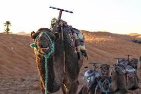 3 day desert tour to merzouga a traveler u0027s honest review