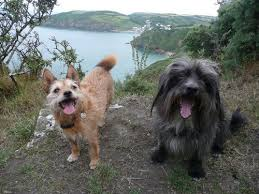 Holiday Cottages Mevagissey by Mevagissey Holiday Cottages Dog Friendly Cottages In Cornwall