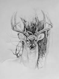 one of don u0027s bucks sketch from a photo by rattlinantler ww u2026 flickr