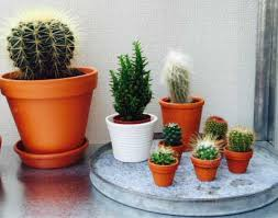 cactus desert type our house plants