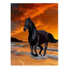 Black Horse Mustang Black Horse Gifts On Zazzle