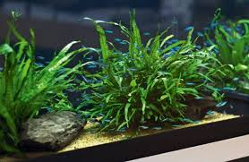 Aquascape Malaysia The Low Tech Planted Aquarium U2014 Practical Fishkeeping Magazine