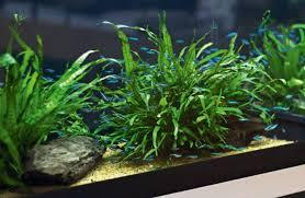 10 gallon planted tank led lighting the low tech planted aquarium practical fishkeeping magazine