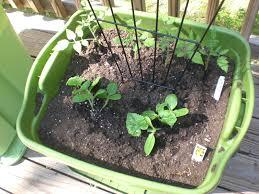 Vegetable Pot Garden by Back Porch Garden Rubbermaid Container Garden