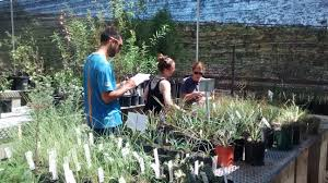 native plant restoration nursery u2013 back to natives restoration