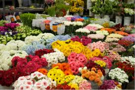 whole sale flowers susie s wholesale flowers southern california flower market