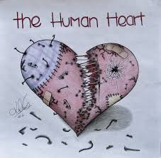 clipart library more like human heart sketch by vegetarules101