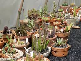 my greenhouse and plants cactiguide com