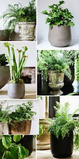 Indoor Plant Vases How To Amp Up Your Space With Houseplants Apartment34