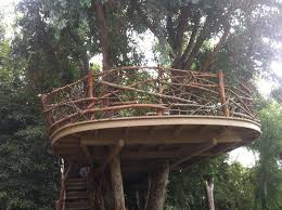 tree platform search treehouse treehouse