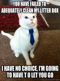 Clean Cat Memes - you have failed to cat meme cat planet cat planet