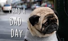 Sad Pug Meme - these extremely sad pugs will make your heart melt 9gag