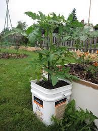 9 ways to grow tomatoes bonnie plants