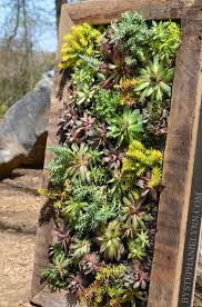 How To Make A Succulent Planter Succulent Wall Planter How To Build A Vertical Garden