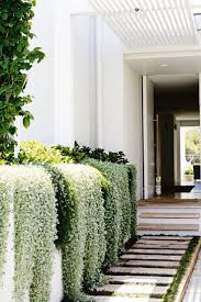 White Bedroom Plants 656 Best Plant Me Images On Pinterest Plants Home And Green