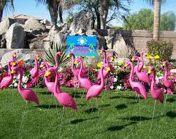 we classic lawn flamingo s so random yet became so