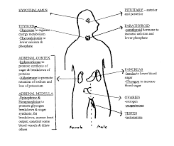 Endocrine System Concept Map Endocrine System Hormones Human Anatomy Charts