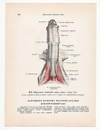 Human Anatomy Skeleton Diagram Items Similar To 2 Vintage Illustrations Mature Print