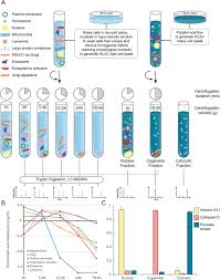 global quantitative and dynamic mapping of protein subcellular
