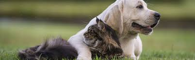 pet care home healthy pets of ohiohealthy pets of ohio