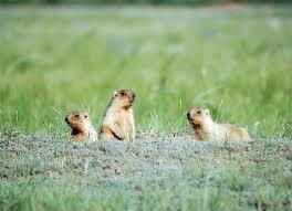 bullied benefits groundhogs