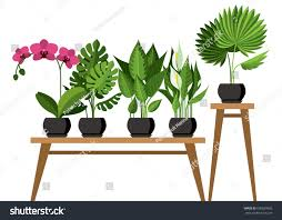 vector collection indoor house plants pots stock vector 600659603