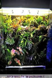 29 best my wishes images on pinterest plants gardens and terrariums