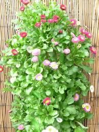 polanter hanging vertical gardening flower pot patio garden