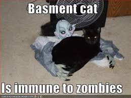 Zombie Memes - basment cat is immune to zombies cheezburger funny memes funny