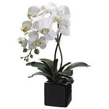 artificial orchids artificial orchids