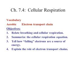 cells and energy vocabulary practice answers 100 images