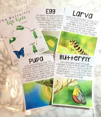 worksheet butterfly life cycle printables wosenly free lesson plan