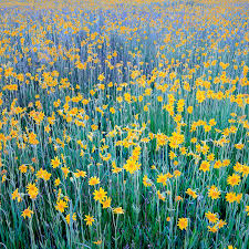Flowers Near Me - bahr images photo