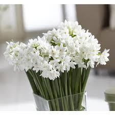shop plants bulbs u0026 seeds at lowes com