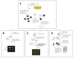 histone modification research methods
